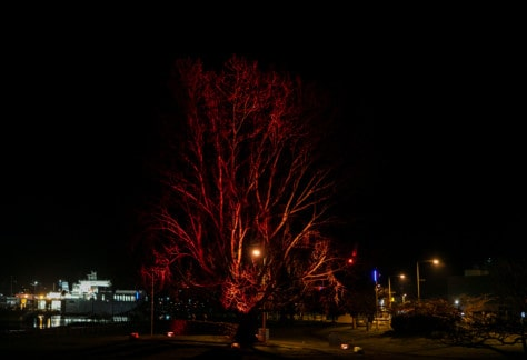 Tree in town